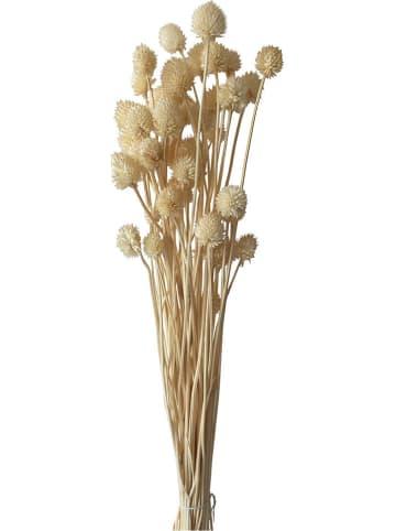 Deco Lorrie Szczeć w kolorze brązowym - wys. 70 cm