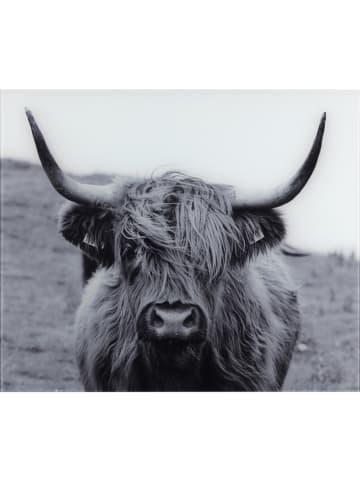 """Wenko Spatbescherming """"Highland Cattle"""" grijs - (L)60 x (B)50 cm"""