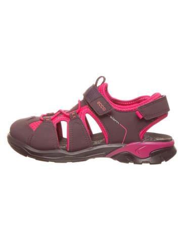 """Ecco Półsandały """"Biom Raft"""" w kolorze fioletowym"""