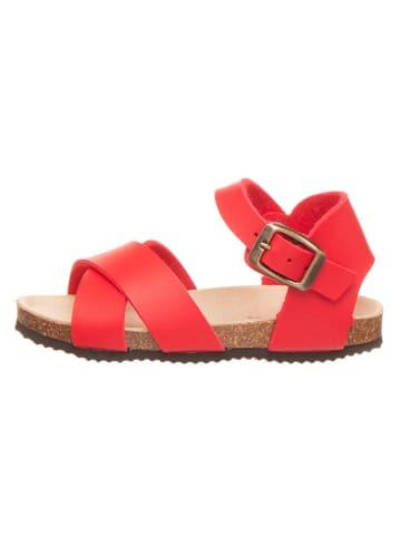 BIO PINGÜIN Sandalen rood