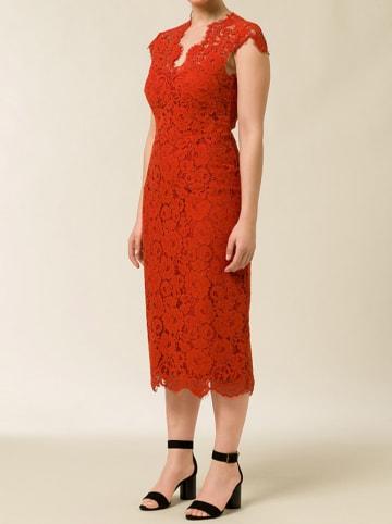 IVY & OAK Sukienka w kolorze czerwonym
