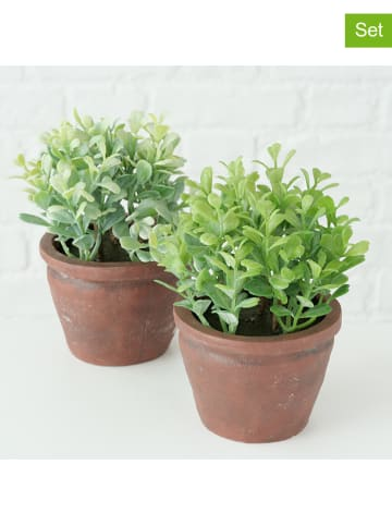 Boltze Dekoracyjne rośliny (2 szt.) w kolorze zielono-brązowym - wys. 17 x Ø 10 cm