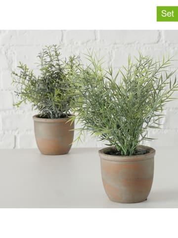 Boltze Dekoracyjne rośliny (2 szt.) w kolorze zielono-szarym - wys. 23 x Ø 10 cm