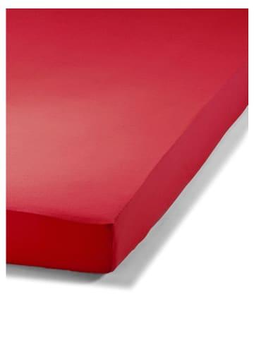 Schiesser Dżersejowe prześcieradło w kolorze czerwonym