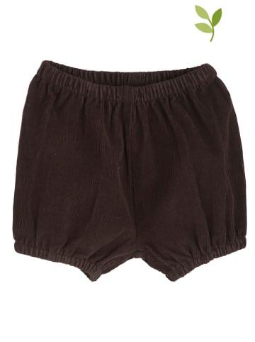 Serendipity Shorts in Braun